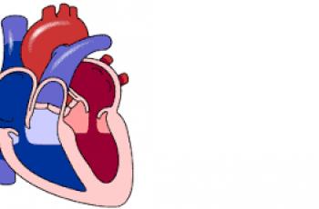 Calculate Cardiac Output.